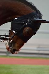 Foto op Plexiglas race horse in paddock