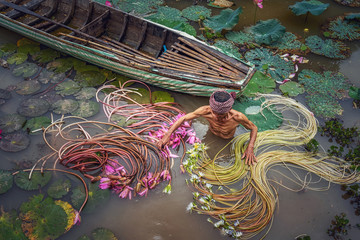 Top view Old man vietnamese picking up the beautiful pink lotus in the lake at an phu, an giang province, vietnam, culture and life concept