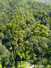 green tree in forest