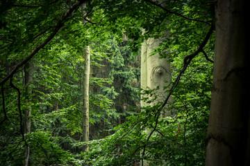 Das grüne Fenster im Wald