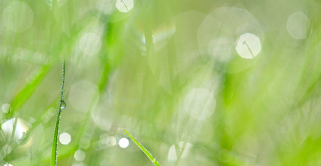 dewy grass - background with empty space for text