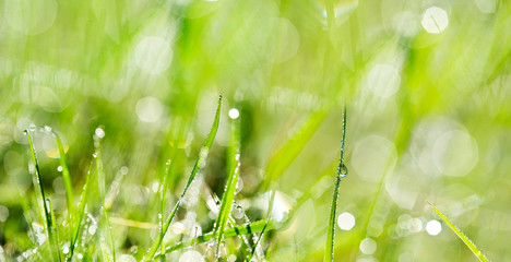 dewy meadow grass - background with empty space for text