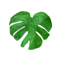 Tropical monstera leaf. Vector illustration. Watercolor textured hand drawn silhouette isolated on white background.