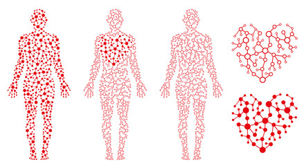 Human Body Health, Heart and Blood, Blood Circulation