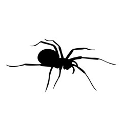 silhouette of spider on white background