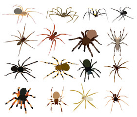 spider set, collection