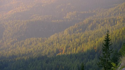 Fototapete - Early morning shot of autumn mountains with colorful trees in first rays of sunlight of a new day.