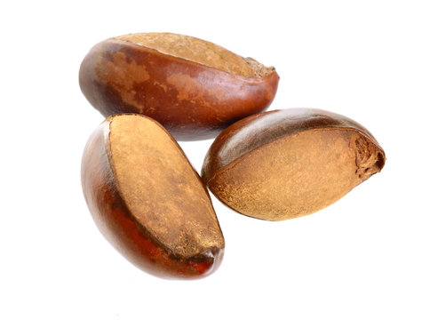 Three nuts Vitellaria paradoxa , commonly known as shea tree or