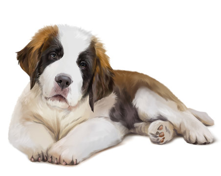 St. Bernard's dog is down. Watercolor painting