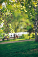 green leaves in the Park