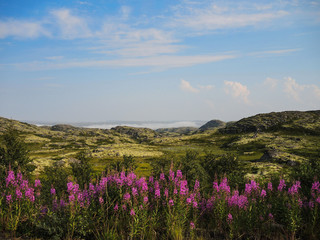 Northern tundra landscape