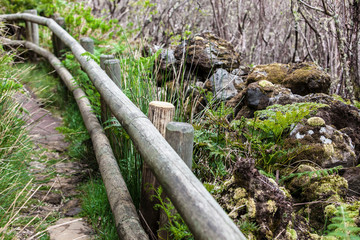 a path with a handrail in the forest