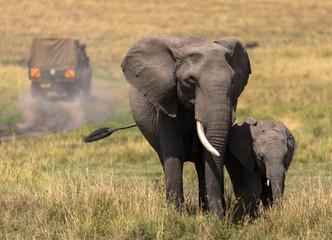 Elefanten mit Safari-Fahrzeug