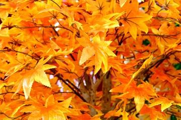 plastic Maple leaf