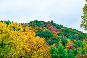 Hillside of Colors in New England