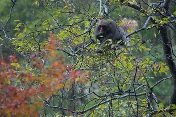 枝の上の猿