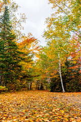 Rake the Leaves, New York, Adirondack Mountains