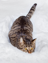 cute cat hiding in snow