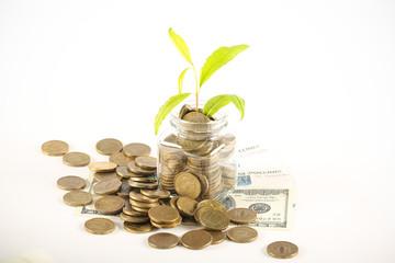 деньги разные и растение на ярком фоне