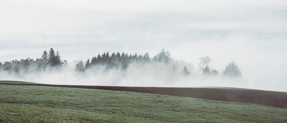 Scenic view of grassy field against cloudy sky during foggy weather