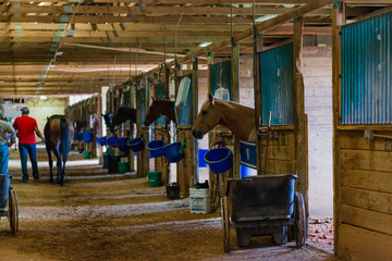 Winning horses on derby day at the racetrack in stalls