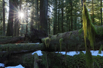 Mount Rainier National Park, WA, USA.