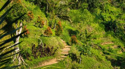 montagne de Bali
