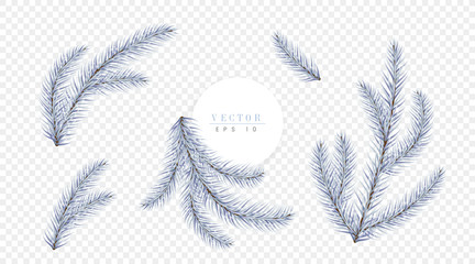 White Christmas tree branches isolated on transparent background, can be used for decoration of christmas brochures, invitations and booklets. Vector illustration
