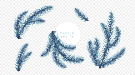 Realistic blue Christmas tree branches isolated on transparent background, can be used for decoration of advertising banners, flyers and christmas postcards. Vector illustration
