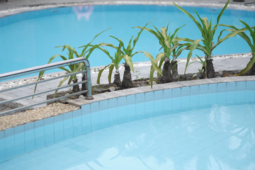 Swimming pool with clear blue water and exotic plants with long green leaves on the skirting