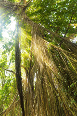 Tropical exotic rain forest jungle on Asian Bali island with sun light rays