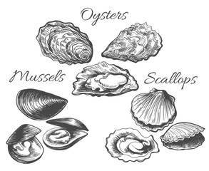 Oysters and scallops sketch. Clam seafood and mussels vector ink hand drawn vector illustration