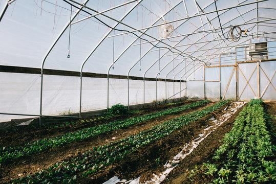 High Tunnel Farming Greenhouse