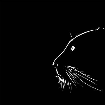 Panther walking from dark. vector Logo design, on black background image