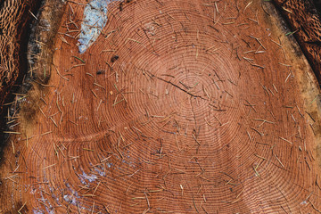 Tree log cut cross section close up