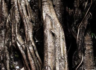 root  bark tree closeup background