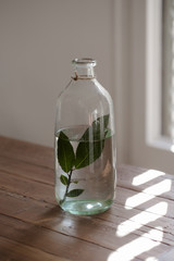 Glass botlle with leaves to decorate for Christmas