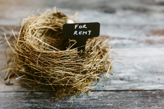 An empty nest with a rental sign. Real Estate concept.