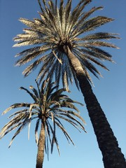 palm trees against the bright Sunny sky
