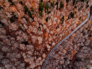 Top view of a road between autumn forest at mountains.