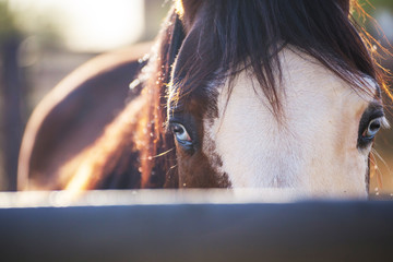 Eyes of a Horse, Horse in Stable, Horse with Blue Eyes