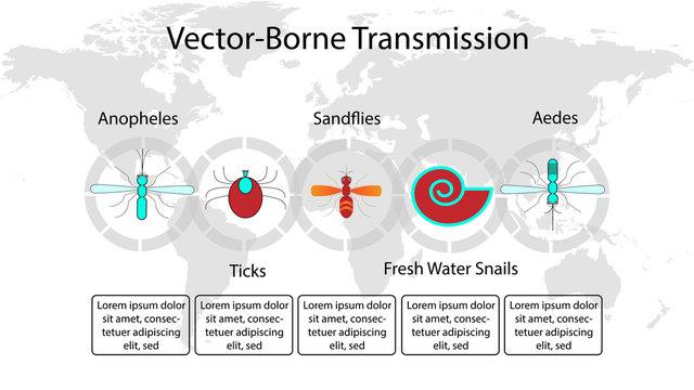 vector-borne transmission