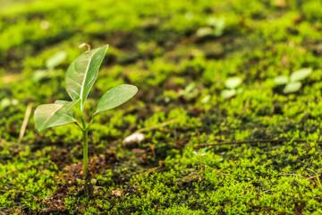Moss in garden