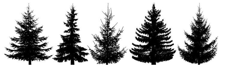 Forest trees set. Isolated vector silhouette. Christmas tree, fir-tree, pine, pine-tree, Scotch fir, cedar