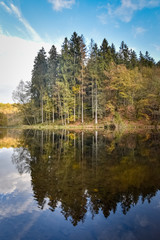 Pine trees reflecting in the calm flowing Ourthe at autumn Belgium