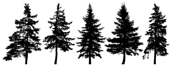 Forest trees silhouette. Isolated vector set. Christmas tree, cedar, fir-tree, pine, pine-tree, Scotch fir