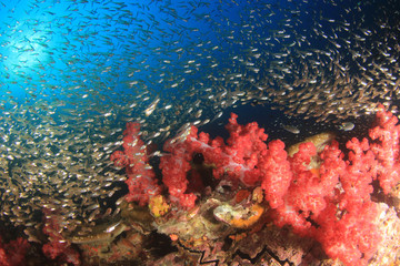 Underwater coral reef in Thailand