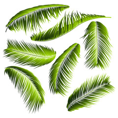 Palm Leaves Isolated. Realistic Branches Set. Vector Tropical Foliage. Floral Elements. Illustration of Jungle Plants. Tropic Palm Leaves for Pattern, Wallpaper, Print, Fabric, Textile or Your Design.