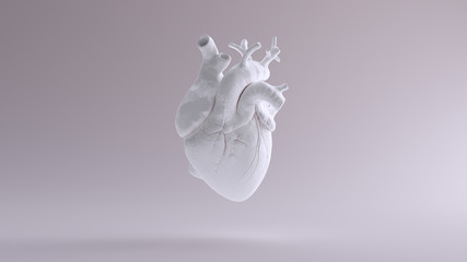 White Heart Anatomical 3d illustration 3d render