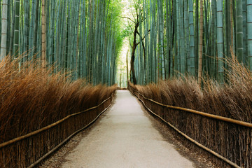 Fototapete - The Bamboo Forest of Arashiyama, Kyoto